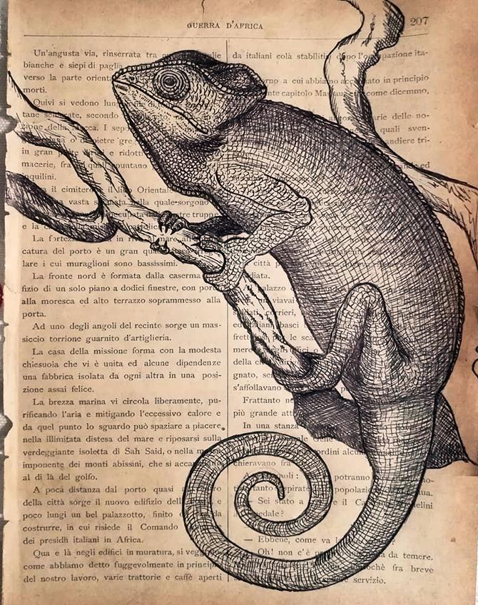 disegno-camaleonte