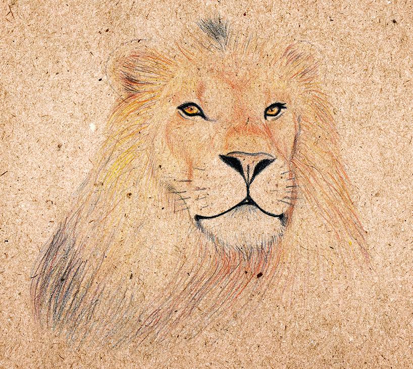 disegno-leone