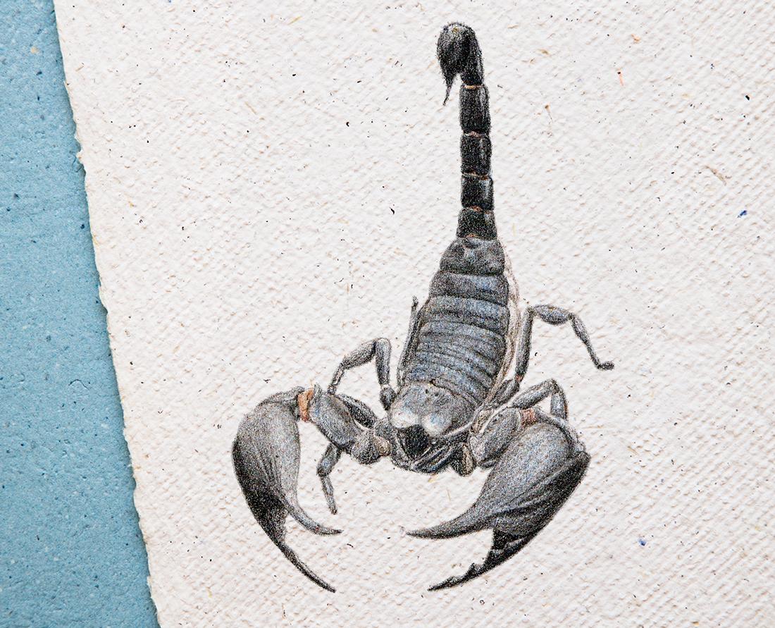 disegno-scorpione